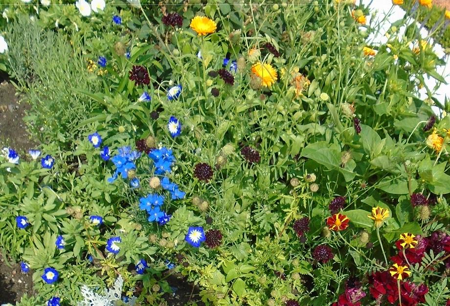 berlin.charlottenberg.flowerbed